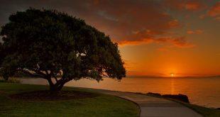 Omana Regional Park, Auckland Region, New Zealand