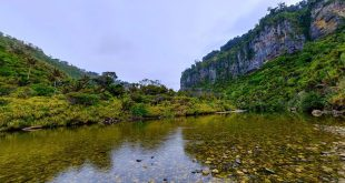 Paparoa National Park, West Coast Region, New Zealand