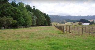Whakatiwai Regional Park, Auckland Region, New Zealand