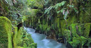Whirinaki Forest Park, Bay of Plenty Region, New Zealand