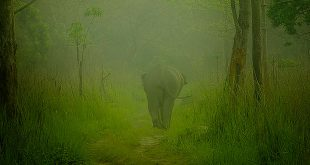 Manas National Park, Assam, India