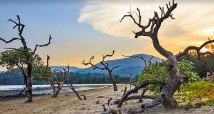 Saddle Peak National Park, Andaman and Nicobar Islands, India