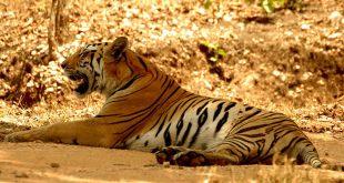 Indravati National Park, Chhattisgarh, India