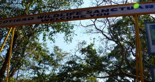 Cotigao Wildlife Sanctuary, Goa, India