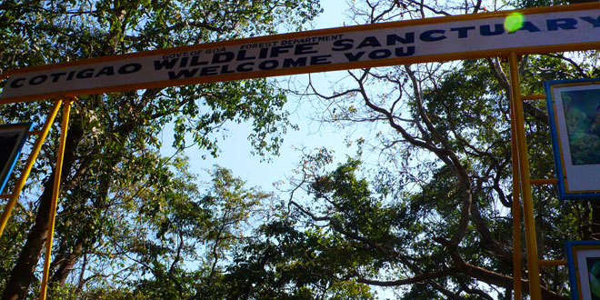 Cotigao Wildlife Sanctuary, Goa, India