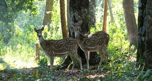 Kalesar National Park, Haryana, India